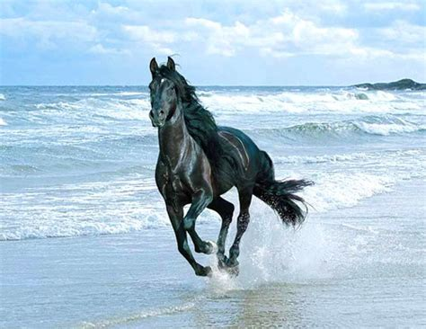 stolzes pferd galoppiert den strand entlang bild