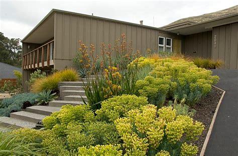 plants for modern landscaping front yard landscape ideas that make an impression