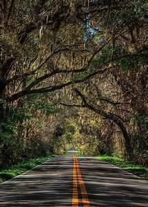 20 lugares maravilhosos para visitar na Flórida – Quero ...