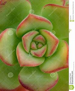 Cactus Sans Epine : fleur verte de cactus image stock image 5557471 ~ Melissatoandfro.com Idées de Décoration
