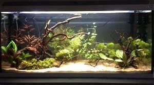 Idee Decoration Aquarium : 120l amazonien ~ Melissatoandfro.com Idées de Décoration