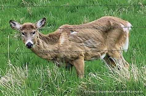 New Confirmed Spread Of Deer