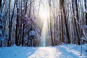 Bilder Bäume Gemalt : gemalt traum wald kostenloses foto auf pixabay ~ Orissabook.com Haus und Dekorationen