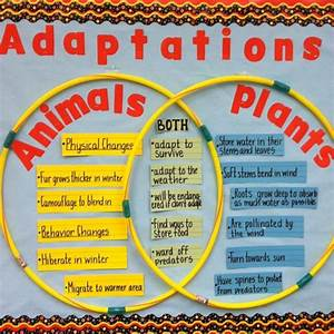 A Good Way To Compare And Contrast Animals And Plants Is To Use A Hula Hoop Venn Diagram  This