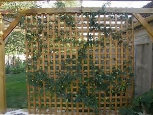 Arche Metal Pour Plante Grimpante : arche de jardin pour plantes grimpantes inspirant ~ Premium-room.com Idées de Décoration