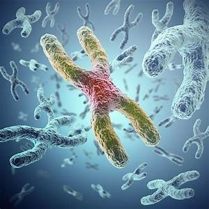 What Is A Telomere And What Do Telomeres Do
