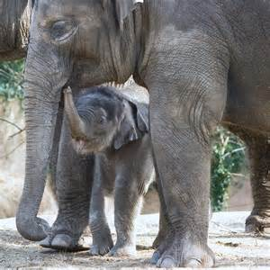 Bigger Animals Means Bigger Risk for Zoo Animals and ...