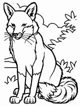 Fox Coloring Pages Printable sketch template