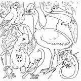 Rainforest Coloring Pages Animals Australian Australia Printable Forest Animal Sheets Colouring Jungle Endangered Colour Printables Species Wildlife Colours Getdrawings Library sketch template