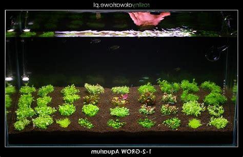 photo plante pour aquarium eau douce
