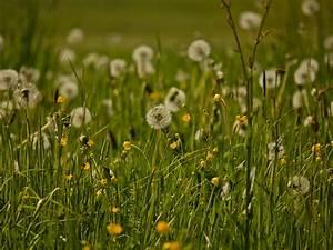 Blumenwiese, 003