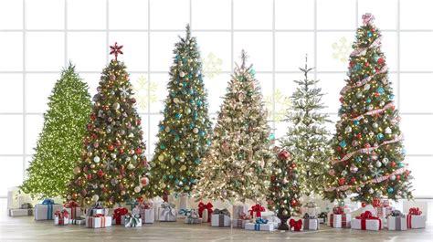 images of home depot live christmas trees christmas tree