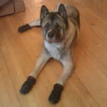 dog booties for hardwood floors