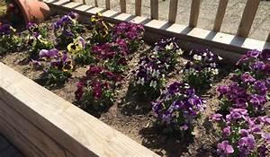 Hochbeet Blumen Bepflanzen : ein hochbeet planen aufstellen und bepflanzen ~ Whattoseeinmadrid.com Haus und Dekorationen