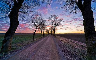 Tree Lined Road Sunset Background