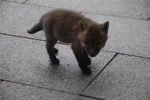 Mader Tier Auto : was ist das f r ein tier ein kleiner fuchs vielleicht tiere marder ~ A.2002-acura-tl-radio.info Haus und Dekorationen