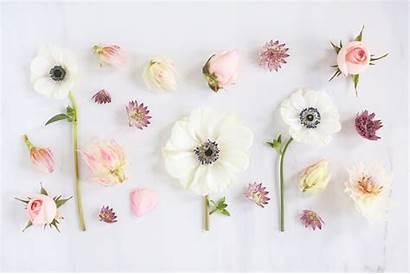 Desktop Floral Flower February Wallpapers Spring Laptop