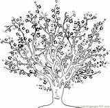 Tree Cherry Coloring Pages Step Printable Cherries Draw Fruits Blossom Drawing Detailed sketch template