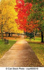 Stock Photographs of Beautiful Autumn Fall forest scene