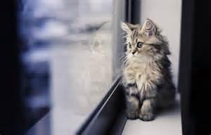 windows cat kitten window reflection cat mood wallpaper 2048x1315