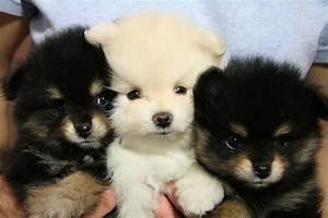 Super Cute Teddy Bear Dog Breed - Dog Breeds Puppies