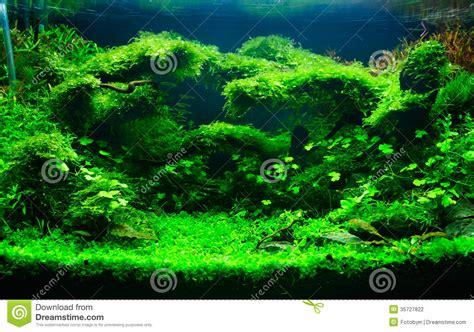 een groen geplant aquarium stock foto afbeelding