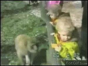 Animals vs kids (40 gifs) | Amazing Creatures