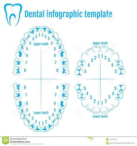 adult dental chart vector illustration cartoondealercom