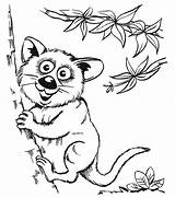 Coloring Pages Animal Animals Wild Opossums Printable Adults sketch template