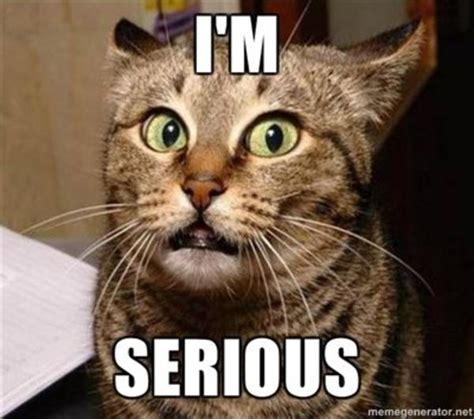 Serious Meme - image 95532 serious cat know your meme