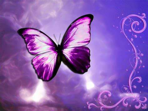 Animated Butterfly Wallpaper - butterfly design wallpaper animal