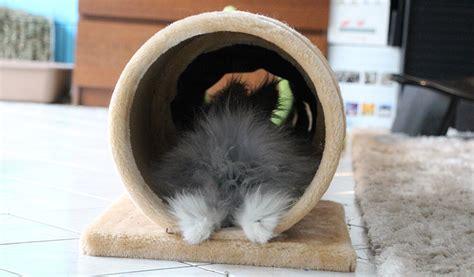 les positions de sieste du lapin