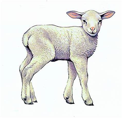 de cuisine orientale encyclopédie larousse en ligne agneau