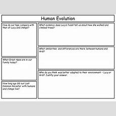 Ks3 Human Evolution By Littlered80  Teaching Resources Tes