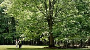 6 Signs Of A Healthy Tree