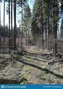 Forest, Path, Stock, Photo, Image, Of, Woods, Path, Pine