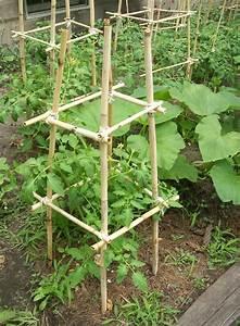 Comment Tuteurer Les Tomates : palissage plante tuteur plante palisser et tuteurer ses ~ Melissatoandfro.com Idées de Décoration