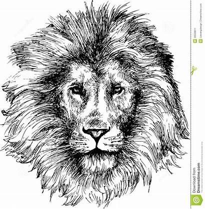 Lion Head Drawn Hand Illustration Cartoon Vector
