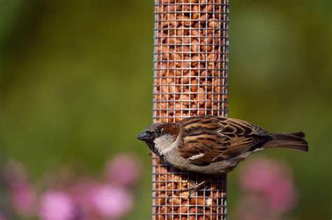 go nuts for birds at kilbroney