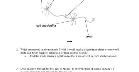 copy of nervous stations worksheet docx docs