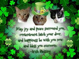 Following Cats: Happy St. Patrick's Day! And good news!