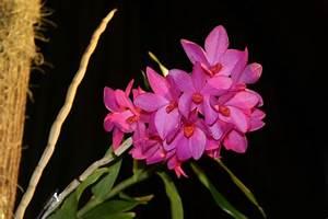 Orchideen Oase Berlin : thailand import bei schwerter orchideen eingetroffen ~ A.2002-acura-tl-radio.info Haus und Dekorationen