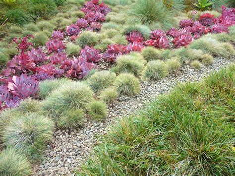 arid landscape design arid landscape design landscape contemporary with sheep s fescue succulent dry creek