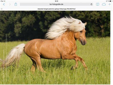 fotos pferden pferde wie viel wei 223 t du 252 ber sie
