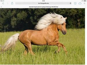 Bilder Von Pferden : pferde wie viel wei t du ber sie ~ Frokenaadalensverden.com Haus und Dekorationen