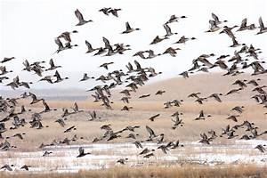Majestic migration! - Conservator