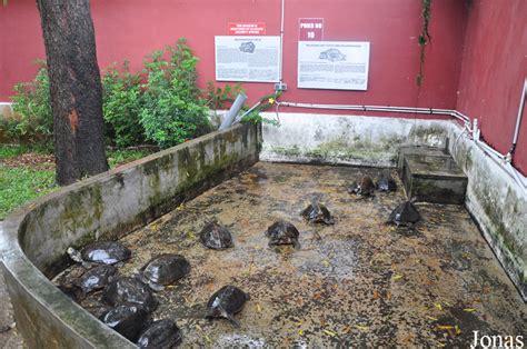 les zoos dans le monde the live turtle tortoise museum