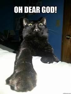 Oh Dear God Cat Memes Quickmeme