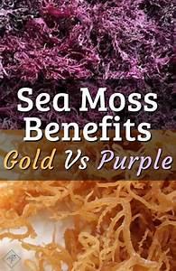 gold sea moss vs purple sea moss sea moss seamoss