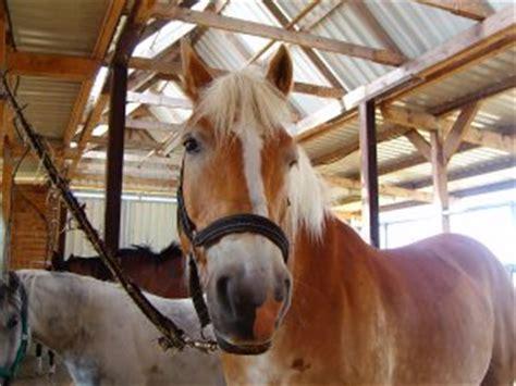 pferdehaltungl im kidswebde